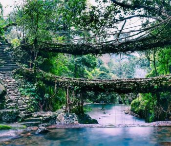 Root-bridges-in-Shillong